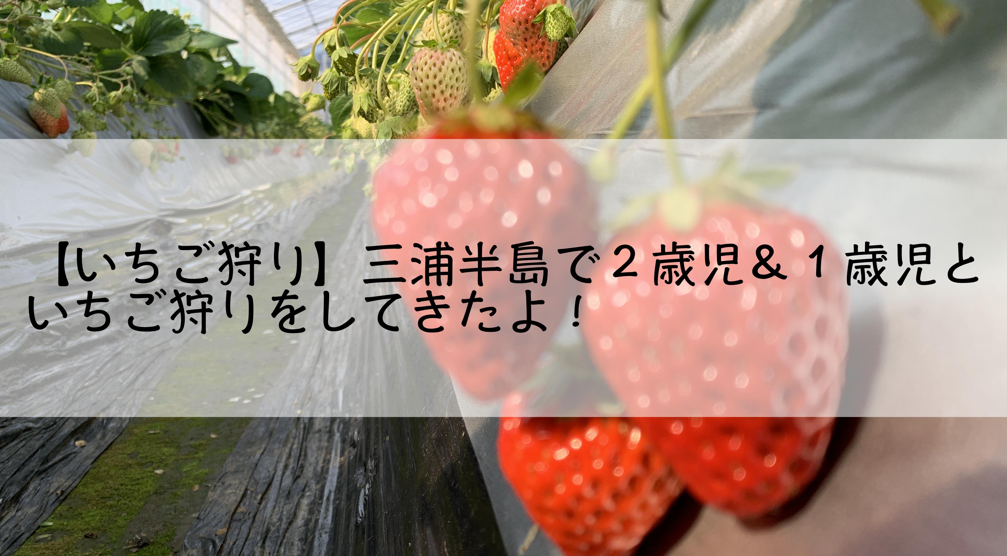【いちご狩り】関東から日帰り可能!三浦半島で2歳児&1歳児といちご狩りをしてきたよ!